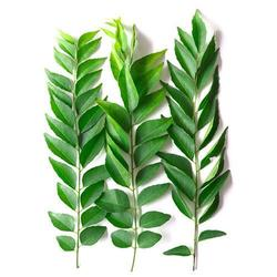 Curry Leaves each