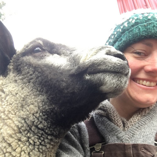 Harry, a grey and black Romney ram poses for a selfie with the sheperdess, who wears a hand knitted fair isle hat, hand knitted cowl, and grey  shetland wool sweater with brown coverallssweater