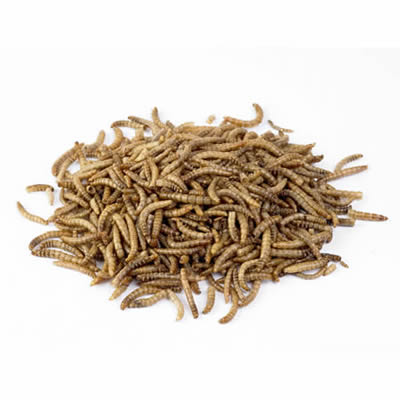 Dried Mealworms - Jozi Bugs