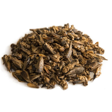 Dried Crickets (100g) - Jozi Bugs