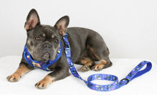 Load image into Gallery viewer, Doggie Blue Leash