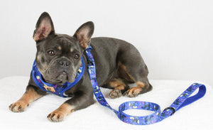 Doggie Blue Leash
