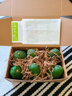 Small Avocado Box- Monthly Subscription