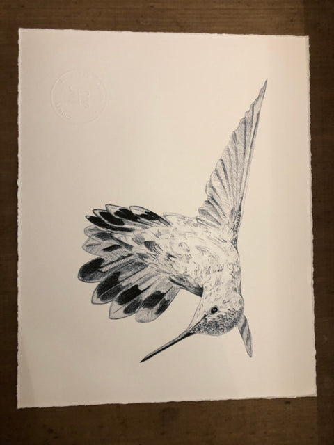 Sarah Hammond Studio Art Print Hummingbird