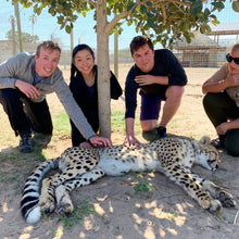 "Load image into Gallery viewer, This cheetah was so sweet and calm!</br></br>Date: 2020-03-19</br></br>Location: Cheetah Outreach</br></br>Outfit: <a href=""https://www.floatthere.com/search?q=Lululemon"">Lululemon</a>"