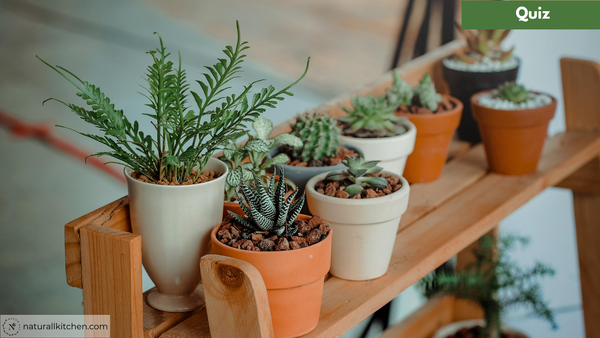 QUIZ: Which Plant Are You?
