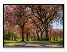 Load image into Gallery viewer, Edinburgh Art Print, Meadows, Scotland Photography, Travel art, Edinburgh Skyline, Edinburgh Meadows Blossom, Edinburgh Print