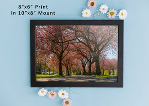 Edinburgh Art Print, Meadows, Scotland Photography, Travel art, Edinburgh Skyline, Edinburgh Meadows Blossom, Edinburgh Print