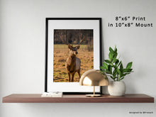 "Load image into Gallery viewer, Scottish White Lipped Deer, Deer Art, Deer Print, Scottish Deer, Wildlife Deer, Stag Print, Christmas Gifts, Deer Gift, 8""x6"" Photo"
