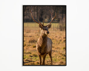 "Scottish White Lipped Deer, Deer Art, Deer Print, Scottish Deer, Wildlife Deer, Stag Print, Christmas Gifts, Deer Gift, 8""x6"" Photo"