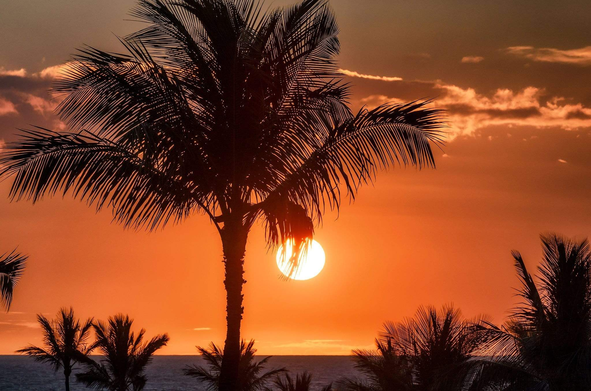 Orange Sunset with Palm Tree
