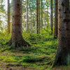 Wide Forest scene with sun beams