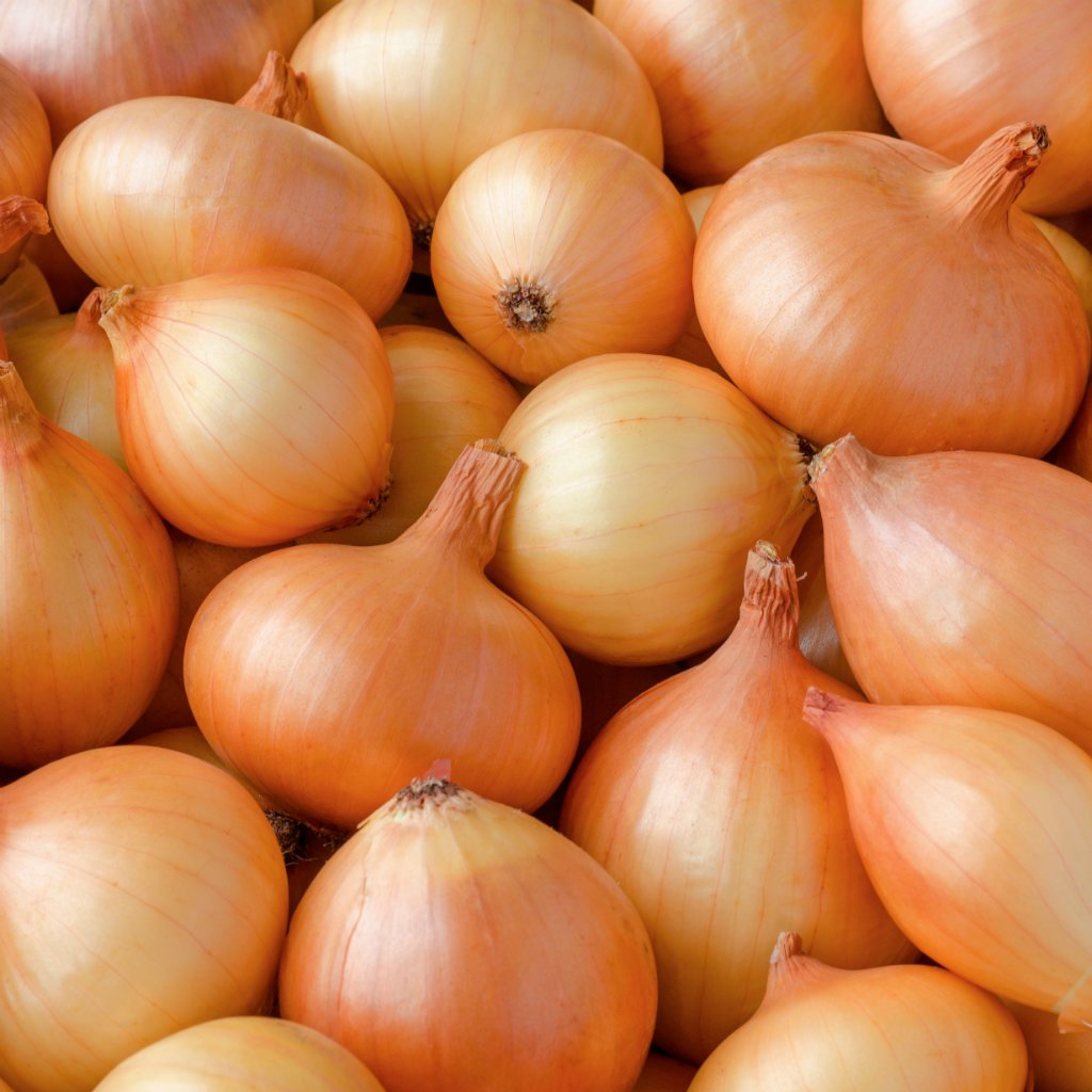 ONIONS BROWN KG