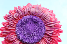 Load image into Gallery viewer, Pink Sunflower