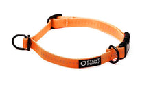 Small Orange Collar