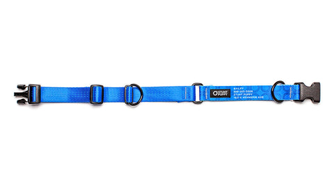 Blue Stunt PuppyID Collar - BlueID