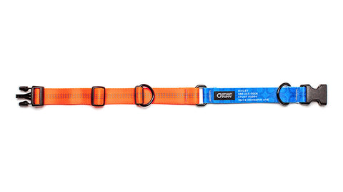 Orange Stunt PuppyID Collar - BlueID