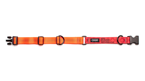 Orange Stunt PuppyID Collar - RedID