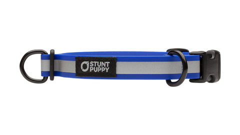 Small Go Dog Glo™ Dry Collar™ - Royal Reflective