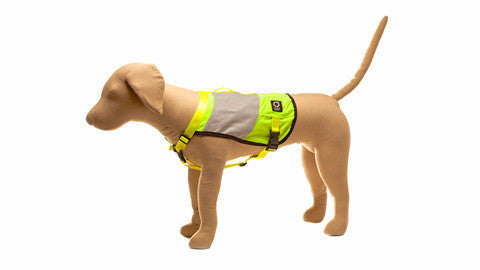 Go Dog Glo™ High Visibility Vest - ExtraSmall_Small