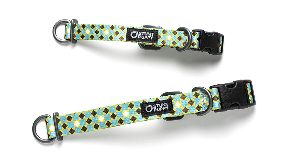 Stunt Puppy Pattern Collar