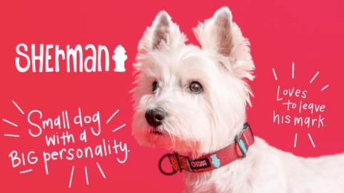 A westie named Sherman: Small dog with a BIG personality. Loves to leave his mark.