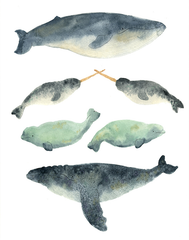 Narwhals Love to be in the Mix