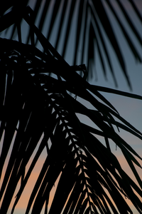 Sunset Palm 5x7 matted photo