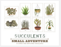 Succulent Card Set of 8