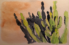 Cactus Shadow Play water color 6X8""