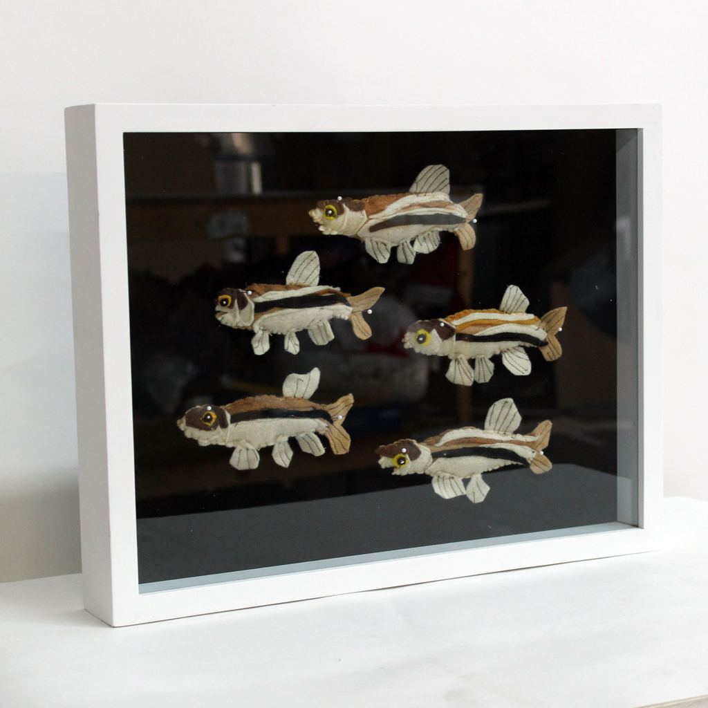 LA River Fathead Minnow Shadowbox