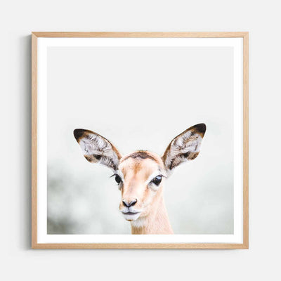 Print Workshop, Framed Print (Square Size), Baby Deer, Natural Australian Oak Box Frame with White Border