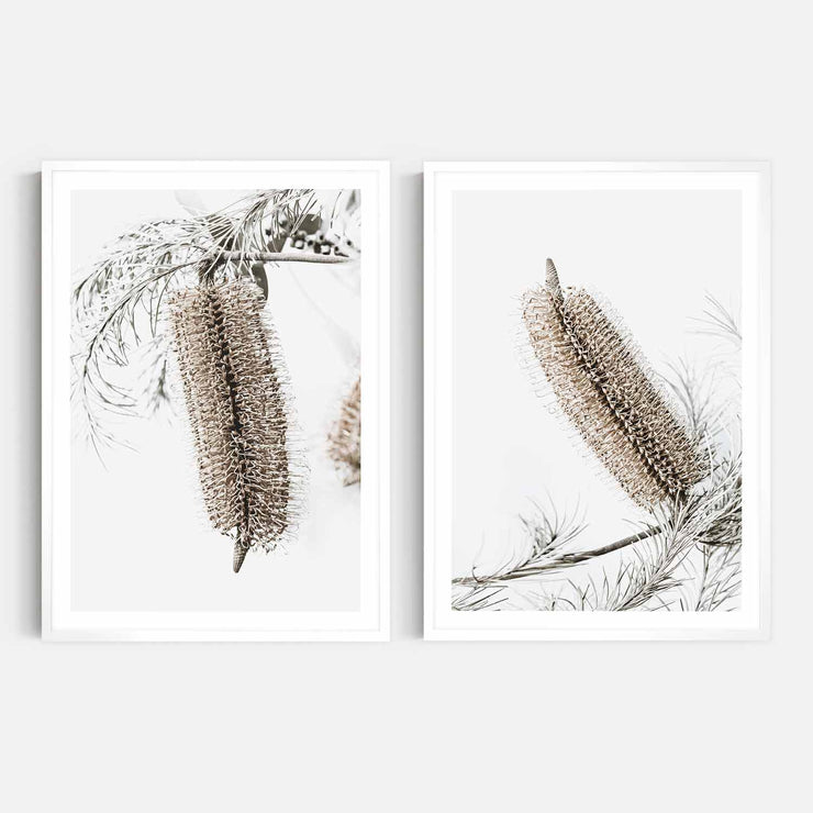Print Workshop, Framed Print, Banksia Earth 1 & 2, Box Frame, White Smooth Coating with White Border