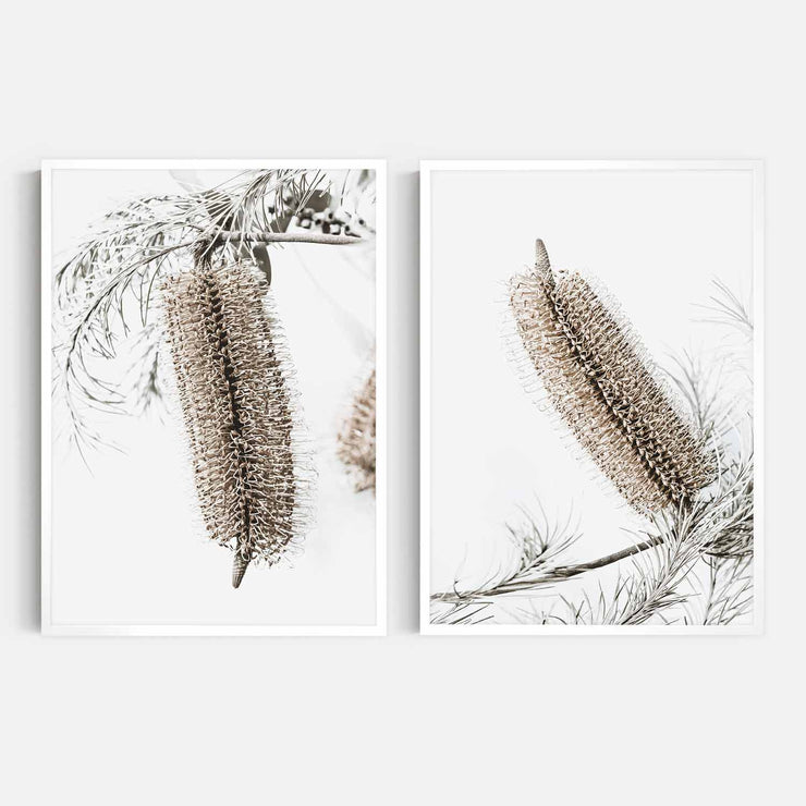 Print Workshop, Framed Print, Banksia Earth 1 & 2, Box Frame, White Smooth Coating, No White Border