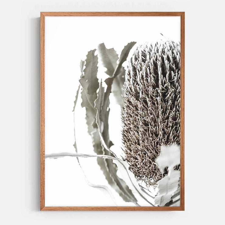 Print Workshop, Framed Print, Banksia Flora, Natural Oak Box Frame, Chestnut Stain, No White Border