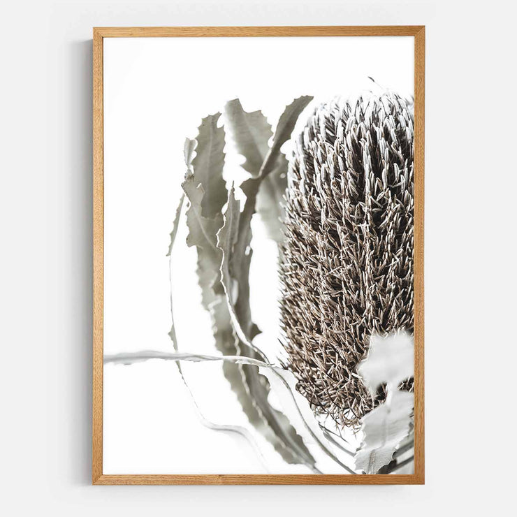 Print Workshop, Framed Print, Banksia Flora, Natural Oak Box Frame, Light Oak Stain with White Border