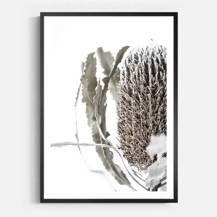 Print Workshop, Framed Print, Banksia Flora, Box Frame, Black Smooth Coating with White Border