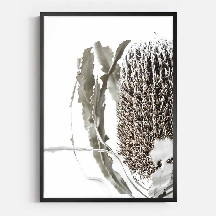 Print Workshop, Framed Print, Banksia Flora, Box Frame, Black Smooth Coating, No White Border