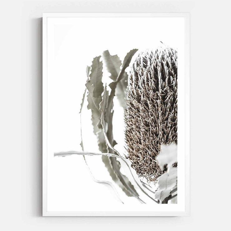 Print Workshop, Framed Print, Banksia Flora, Box Frame, White Smooth Coating with White Border