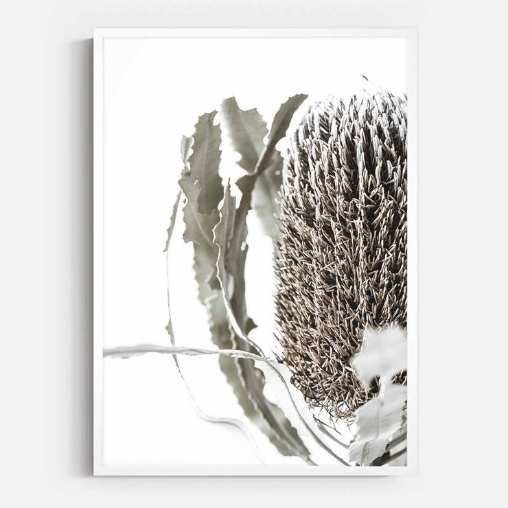 Print Workshop, Framed Print, Banksia Flora, Box Frame, White Smooth Coating, No White Border