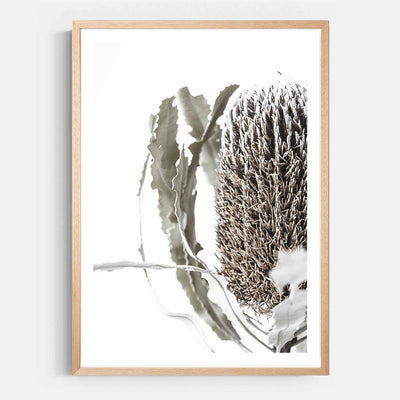 Print Workshop, Framed Print, Banksia Flora, Natural Australian Oak Box Frame with White Border