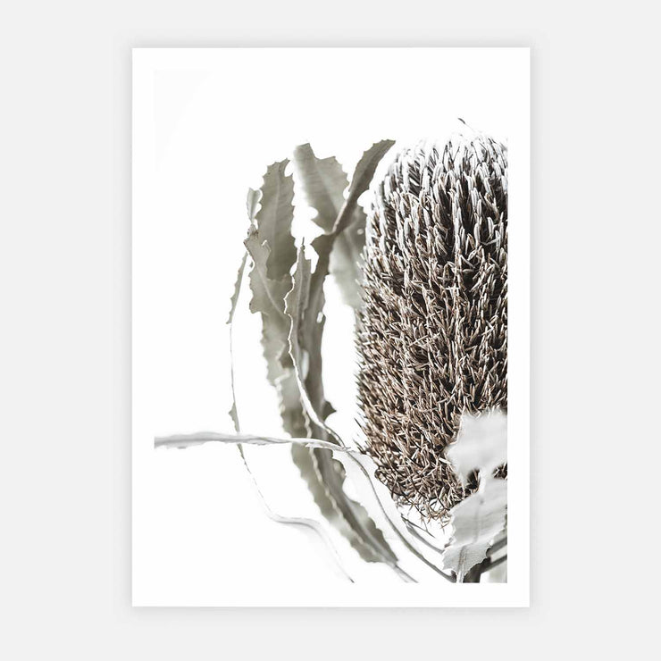 Print Workshop, Banksia Flora, Print Only No Frame with White Border