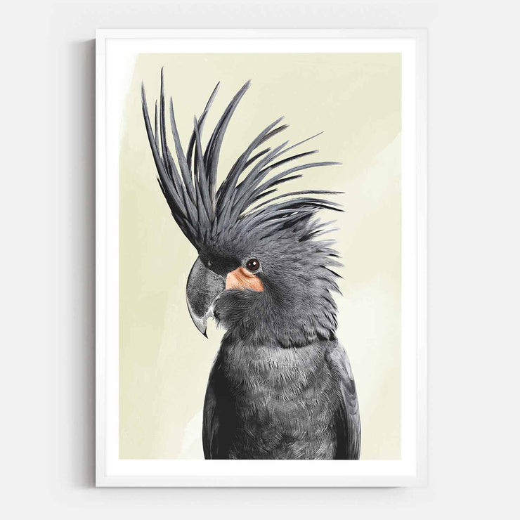 Print Workshop, Framed Print, Black Beauty Cockatoo, Box Frame, White Smooth Coating with White Border