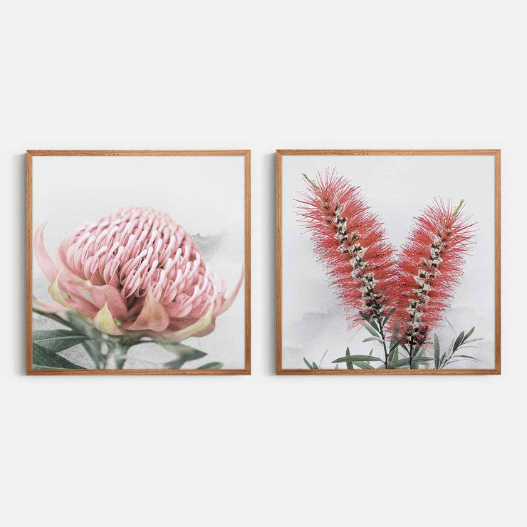 Print Workshop, Framed Print (Square Size), Blooming Waratah & Native Bottle Brush, Natural Oak Box Frame, Chestnut Stain, No White Border