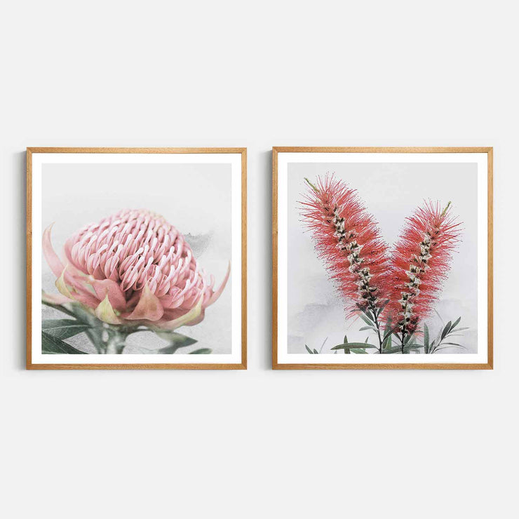 Print Workshop, Framed Print (Square Size), Blooming Waratah & Native Bottle Brush, Natural Oak Box Frame, Light Oak Stain with White Border