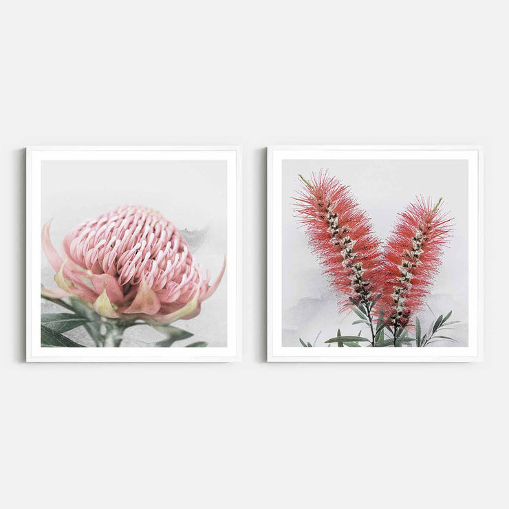 Print Workshop, Framed Print (Square Size), Blooming Waratah & Native Bottle Brush, Box Frame, White Smooth Coating with White Border