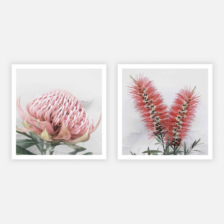 Print Workshop, Blooming Waratah & Native Bottle Brush, Print Only (Square Size) No Frame with White Border