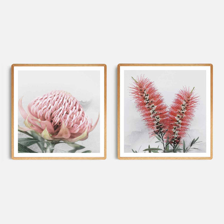 Print Workshop, Framed Print (Square Size), Blooming Waratah & Native Bottle Brush, Rounded Corner Natural Oak Box Frame, Light Oak Stain with White Border