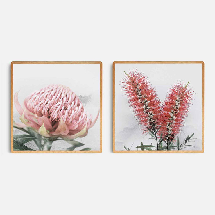 Print Workshop, Framed Print (Square Size), Blooming Waratah & Native Bottle Brush, Rounded Corner Natural Oak Box Frame, Light Oak Stain, No White Border