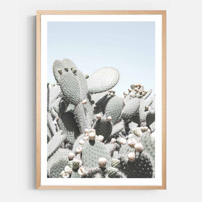 Print Workshop, Framed Print, Cactus View, Natural Australian Oak Box Frame with White Border